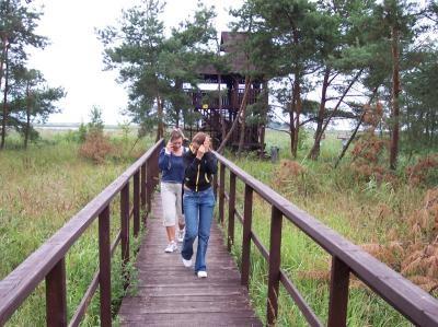 Ptasi Raj Wyspa Sobieszewska - fot. J. Dziurkowski